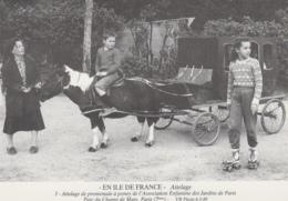 Métiers - Série En Ile-de-France - Attelage Poney - Association Enfants Jardins Paris - Autographe Bernard Viaud - Mestieri