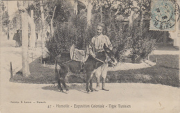 Exposition Coloniale Marseille - Tunisie - Type - Promenade Ane - Expositions