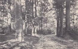 Mont De L'enclus, Orroir, Sous Bois (pk65176) - Mont-de-l'Enclus