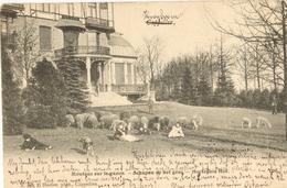 Hoogboom - Hortensia Hof -  H748  - 1904 - Kapellen