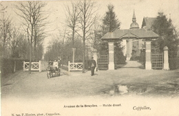 Hoogboom - Hortensia Hof -  H749  - 1903 - Kapellen