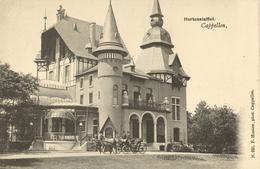 Hoogboom - Hortensia Hof -  H991  - 1905 - Kapellen