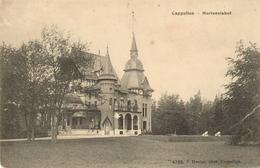 Hoogboom - Hortensia Hof -  H4725  - 1903 - Kapellen