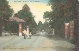 Hoogboom - Hortensia Hof - L'Entrée -  H3993  - 1908 - Gekleurde Kaart - Kapellen