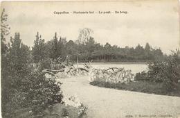 Hoogboom - Hortensia Hof - De Brug -  H4554 - 1910 - Kapellen