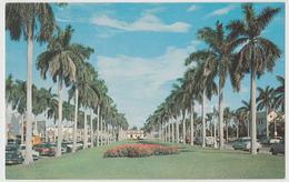 Palm Beach FL Royal Palm Trees Agricultural Postcard Horticulture - West Palm Beach