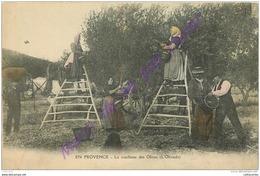 EN PROVENCE . La Cueillette Des Olives ; Olivado . - Francia