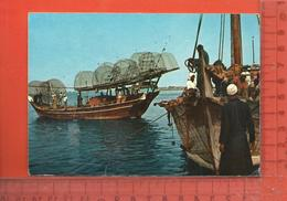 CPM  ARABIE SAOUDITE : The Fishermen Dhows In Ras AlyKhaima - Saudi Arabia