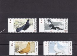 Moldova , Moldavie , Moldau , 2012 , Birds ; Pigeons Of Moldova ; Las Palomas ; Tauben MNH ** - Palomas, Tórtolas