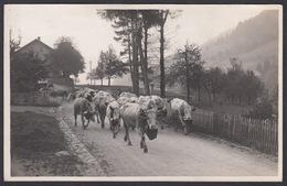 CPA  Suisse, Bei SPIEZ,  Kühe / Vaches,  Carte Photo, 1925, Verlag Fr Von Allmen - BE Berne