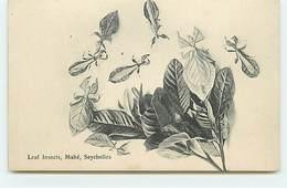 SEYCHELLES - MAHE - Leaf Insects - Seychellen