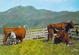 AGRICULTURE Métiers Métier Paysans TRAITE En Montagne (1)(élevage Vache Vaches Cow Cows Photo Sully 19110 Bort*PRIX FIXE - Elevage