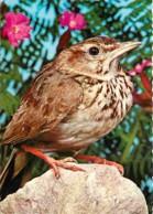 Animaux - Oiseaux - Alouette Des Champs - Carte Neuve - Voir Scans Recto-Verso - Vögel