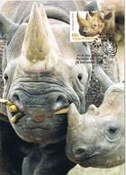 34856. Tarjeta Maxima PARKVILLE (Australia)  2012. Ronoceronte. Rhinoceros, Black Rhino - Rinocerontes