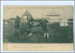 "U8978/ Hengst ""Racker 2111"" Verband Der Pferdezüchter, Elmshorn Pferd Ak  - Paarden"