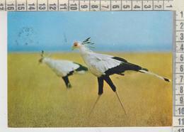 ANIMALS - ANIMAUX -  BIRDS - OISEAUX - SECRETARY BIRD & THE BOSS TANZANIA NICE STAMP - Tanzania