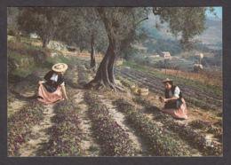 61805/ TOURRETTES-SUR-LOUP, Cueillette Des Violettes - Autres Communes
