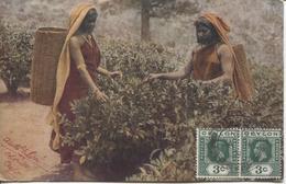 REF50/ Ceylon PC Tea Picking C.Colombo 1921 > Czechoslovaquia - Ceylan (...-1947)