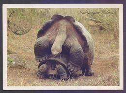 ECUADOR - Picture POST CARD On Giant Land Tortoises, Postal Used 2011 - Schildpadden