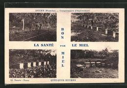 CPA Ducey / Manche, Cooperative D`Apiculture, Quelques Ruches, La Sante Par Le Miel, Imkerei - Ducey