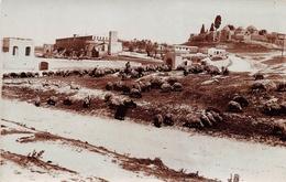 ¤¤   -   SYRIE   -   Carte-Photo   -  ALEP   -  Berger Gardant Ses Moutons Devant L'Hopital      ¤¤ - Syrië