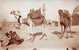 ¤¤   -   SYRIE   -   Carte-Photo   -  ALEP   -  Chameliers , Chameaux      ¤¤ - Syrië