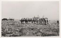 Trinidad   Loading Sugar Cane RP  T235 - Trinidad