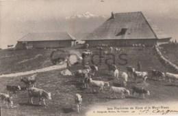 France - Les Fruitieres De Nyon Et Le Mont-Blanc - Cows - Koeien