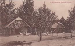 253628Pretoria, In The Zoological Gardens. – 1911. - Afrique Du Sud