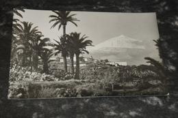 8425      TENERIFE, LA VICTORIA DE ACENTEJO, AL FONDO EL TEIDE - Tenerife