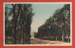 CP20 82 MONTAUBAN  Le Cours Foucault - Montauban