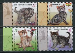 Belarus 2017 Bielorrusia / Cats MNH Gatos Katzen Chats / Cu5912  36-31 - Gatos Domésticos