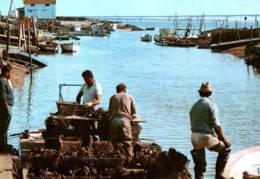 CPM - ILE D'OLERON - ST TROJAN - PORT OSTREICOLE - Edition BOS - Ile D'Oléron