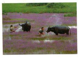 VIETNAM - AK 368464 A Landscape Of Countryside - Vietnam