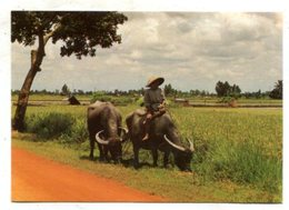VIETNAM - AK 368488 Co-existence - Vietnam