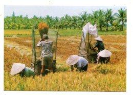 VIETNAM - AK 368497 Harvest - Vietnam