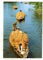 VIETNAM - AK 368510 Excellent Rice Harvest - Vietnam