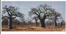 SENEGAL Foret De Baobabs  ANNEE 70 / 80  -NEUF  Voir Detail Annonce - Senegal