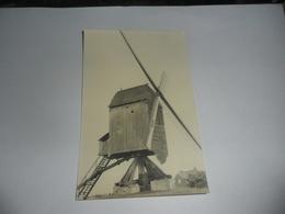Geel Zammel Molen Fotokaart - Geel