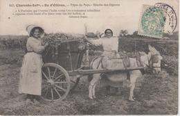 CPA île D'Oléron - Types Du Pays - Récolte Des Oignons (très Belle Scène, Attelage Avec âne) - Ile D'Oléron