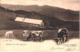 FR88 VOSGES - Luib 1904 - Précurseur - Laiterie Dans Les Vosges - Belle - France