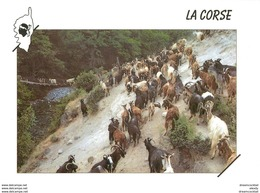 20 CORSE. Cpsm Cpm Troupeau De Chèvres Passage Rivière D'Asco - Non Classés