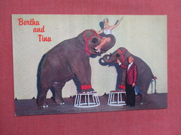Elephants Bertha & Tina Nugget Sparks East Reno      Ref 3754 - Elephants