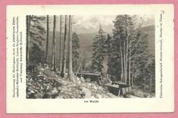 68 - Vogesen - MUNSTER - SCHLUCHT - Tramway électrique - Bergbahn - Zahnradbahn - Schluchtbahn - Im Walde - Frankrijk