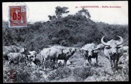 CPA ANCIENNE VIÊT-NAM- COCHINCHINE-  TROUPEAU DE BUFFLES DOMESTIQUES- GROS PLAN - Vietnam