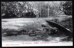 CPA ANCIENNE VIÊT-NAM- COCHINCHINE- SAÏGON- JARDIN BOTANIQUE : LES CAÏMANS- GROS PLAN - Vietnam