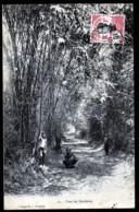 CPA ANCIENNE VIÊT-NAM- COCHINCHINE-  CHEMIN SOUS LES BAMBOUS- ANIMATION D'ENFANTS - Vietnam