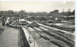 Den Haag - Miniatuurstad Madurodam - Uitgave J.v.d. Hoek No 982 - 1957 - Den Haag ('s-Gravenhage)