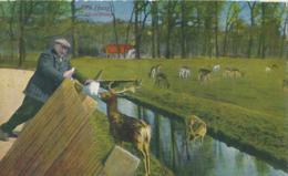 Den Haag - Hertenkamp - 1931 - Den Haag ('s-Gravenhage)