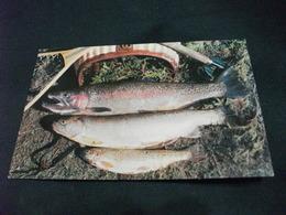 PESCI FISH IN MAINE TROTE - Vissen & Schaaldieren